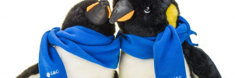 Riesige Resonanz unserer Pinguin-Verlosung. Gustav liegt vorn!